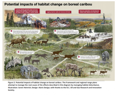 Potential Impacts of Habitat Change on Boreal Caribou